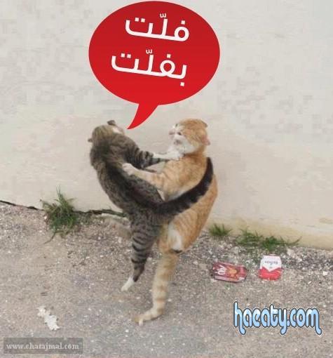 بوك-facebook 1387314305011.jpg
