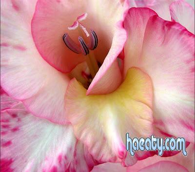 رومانسية 2014 2014 Photos 1377659208721.jpg
