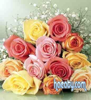 رومانسية 2014 2014 Photos 1377659208916.jpg