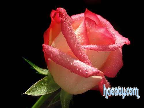 رومانسية 2014 2014 Photos 1377659208957.jpg