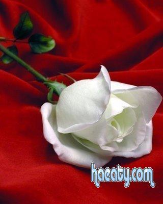 رومانسية 2017 2017 Photos Flowers 1377659289022.jpg
