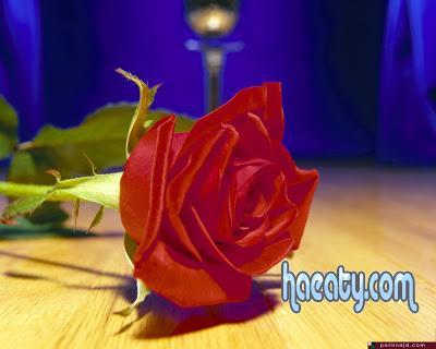 رومانسية 2014, رومانسية 2014 Photos 137778164152.jpg