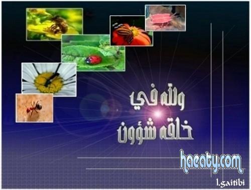 2014 1380219860353.jpg