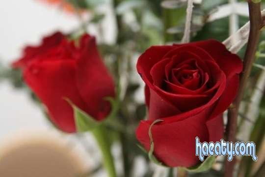 رومانسيه 1380234912437.jpg