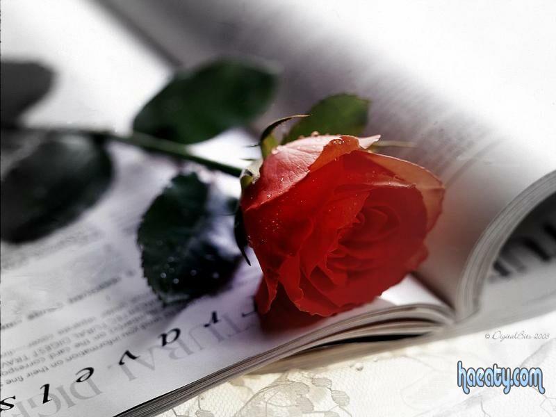 رومانسيه 1384106890336.jpg