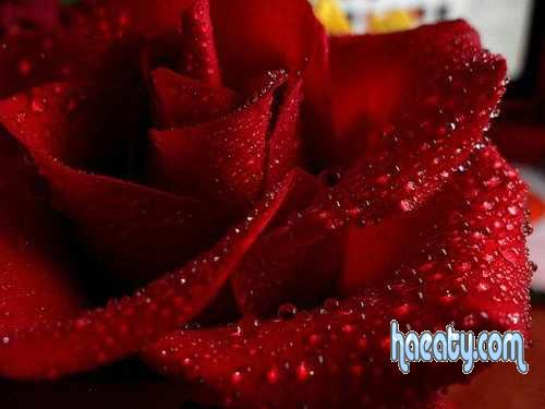 الرومانسية 1384109467029.jpg
