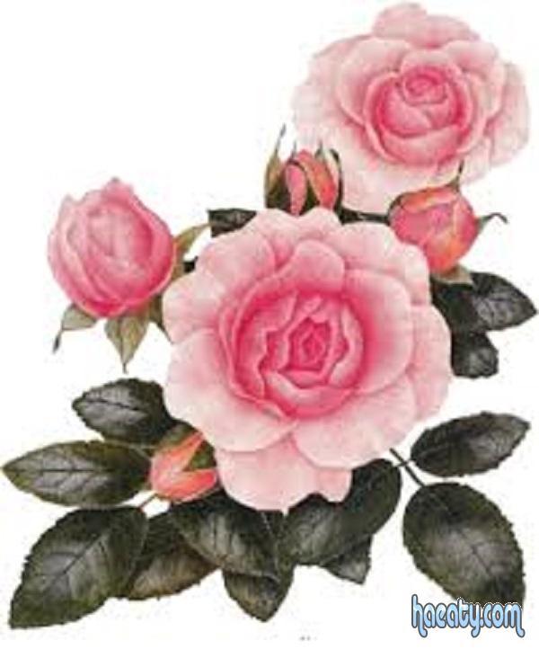 رومانسية 2017 2017 Photos Flowers 1485198209575.jpg